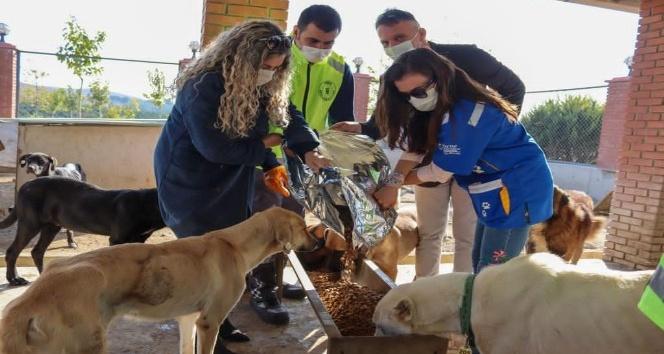 Bursa, İzmir'deki can dostları da unutmadı