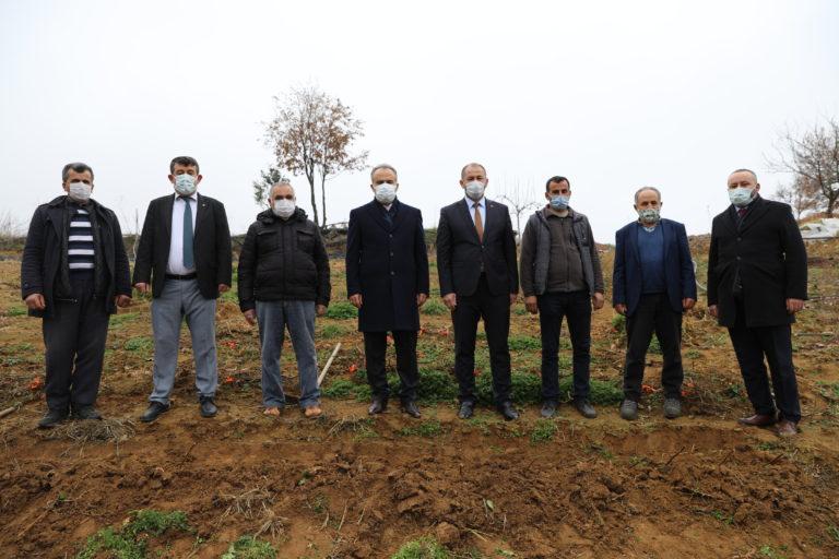 Orhaneli'de ahududu fidanları toprakla buluştu -İZLE