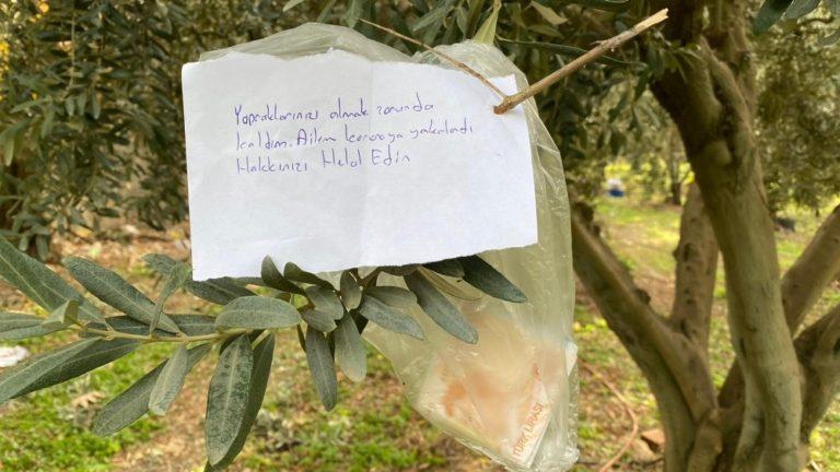 Bursa'da ağaçtaki not ve para şaşırttı